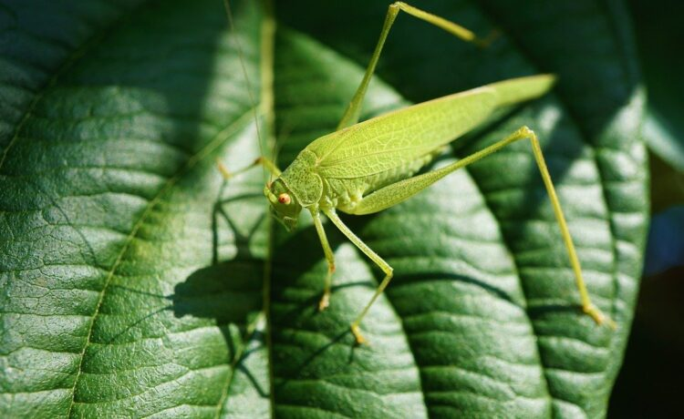 Housebuilding industry can be at the forefront of biodiversity